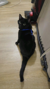 9-10 year old female cat