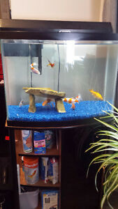 Fish and Tank for sale!!