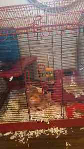 Awesome hamster and cage