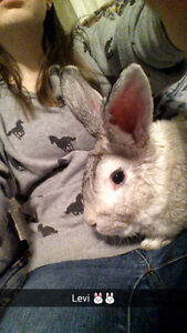 Two bunnies looking for loving home