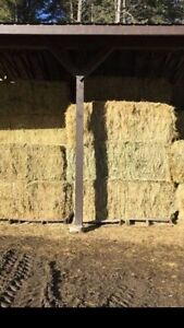 2nd cut Alfalfa horse quality hay for sale