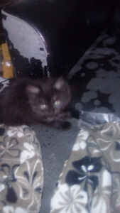Free kittens to good homes Peterborough Peterborough Area image 5
