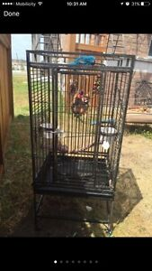 Heavy duty Bird cage with lots of toys