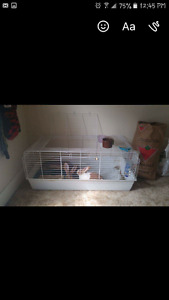 2 Bunnies need a new home!