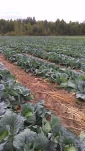 Farm land with greenhouse and home for sale