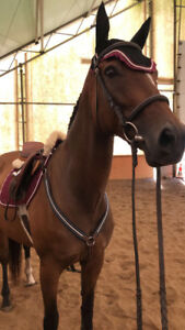 Beautiful OTTB mare for part board