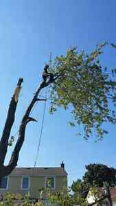 Lumbersmith Tree Removal Services Kitchener / Waterloo Kitchener Area image 5