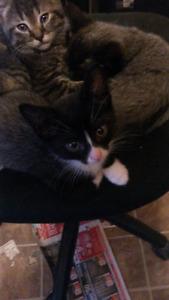 11 week old kittens