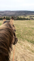 Private Horseback Riding Lessons and Trail Rides