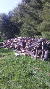 Firewood for Sale Kingston Kingston Area image 1