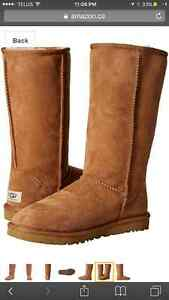 Brand new never worn classic tall uggs ma