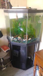 Aquarium 55 gallon en coin