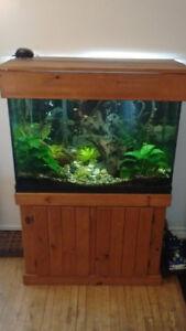 Meuble en bois et aquarium 65 gallons