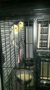 2 cocketiels and parrot cage