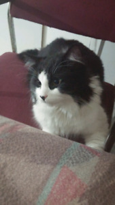Oreo is looking for a new home