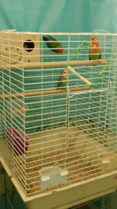 Love birds and budgies