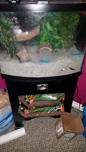 Hermit crabs and tank