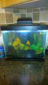 5 gallon fish tank with fish & frogs.