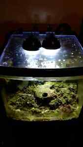 Used biocube with  full spectrum led and pump Windsor Region Ontario image 4
