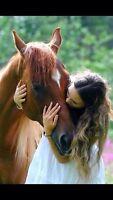 Demi pension cheval st augustin