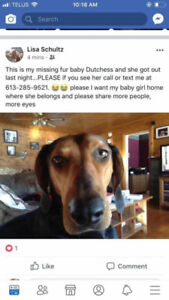 OVLPN - Lost dog outside of Smiths Falls