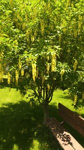 start of summer clearance sale! trees, and shrubs.