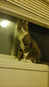WANTED:LOST 1YR OLD MALE TABBY IN N.E MARTINDALE