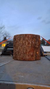 Spruce tree stump, for table or chair
