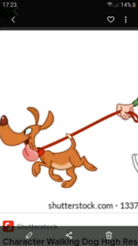 Dog walking / dog sitting 07776471956