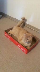 Male Cat - Free to a good home -