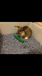 Cute Baby Bunny For Sale :)