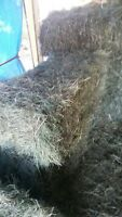 Hay - Square Bales - 1st cut of 2015 $11.00 each