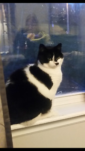 Black and white male cat missing from Cole Harbour area.