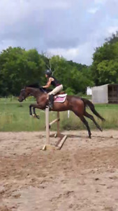 First Private Riding Lesson is Half Price!