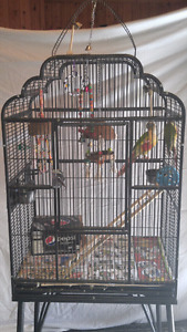 Conure parrots for sale with cage