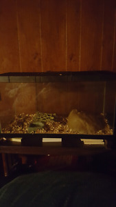 Cornsnake+Cage and heatpad for rehoming