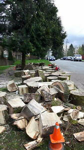 Free Wood - Cottonwood - Fire wood or for Carving