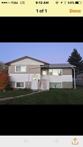 Newly renovated three bedroom Main floor for rent