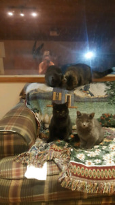 Free kittens to loving home