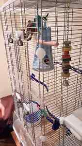 Masked Lovebird with cage and accessories.