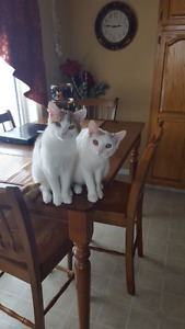2 young male cats to give away to a good home