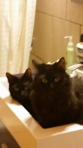 Two 6 yrs old cats need rehoming