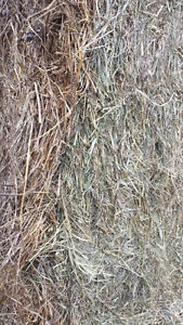 For Sale horse quality 1st and 2nd cut 3x3x8 bales