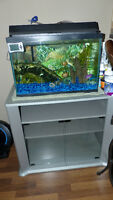 20 Gallon Fish Tank (accessories, tank stand & fish included)!