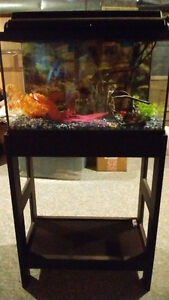 10 Gallon fish tank with stand