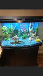 Aquarium 60 Gallons with Filter & Stand $500.00 obo
