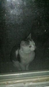 Possibly found a lost cat??