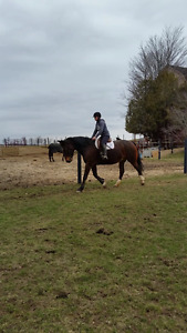 **Horse for part board OR Possible sale**