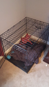 medium sized wire dog crate
