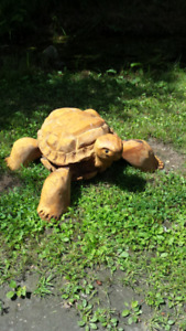 One of a kind hand crafted turtle !